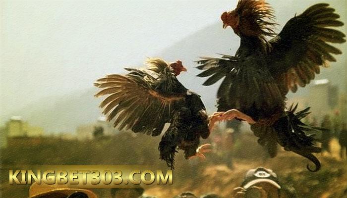 Daftar S128 Akun Sabung Ayam Online