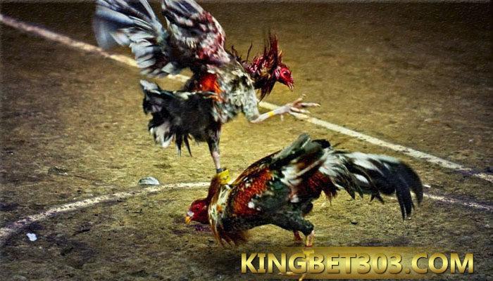 Sabung Ayam Pisau S128