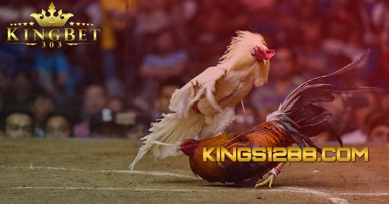 Sabung Ayam S128 Live