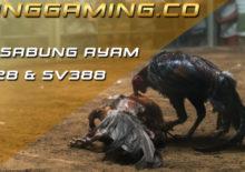 KingGaming